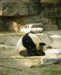 Zoo51