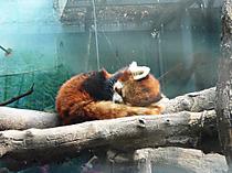Zoo58_2